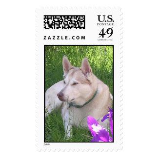 Iris Puppy Stamps