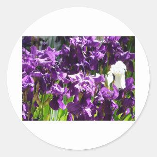 iris,purple 2 classic round sticker