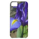 Iris púrpura