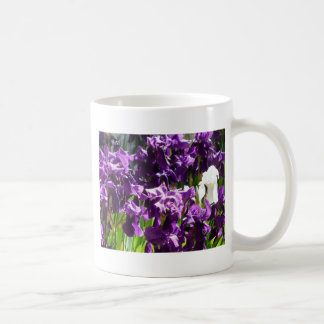 iris, púrpura 2 taza de café