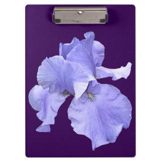 Iris púrpura barbudo alto