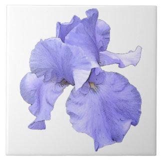 Iris púrpura barbudo alto azulejo cuadrado grande