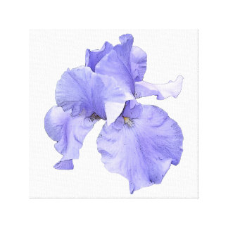 Iris púrpura barbudo alto impresiones de lienzo