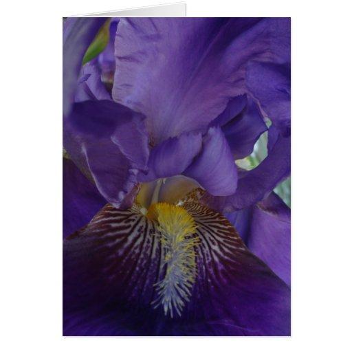 Iris púrpura barbudo tarjeta de felicitación