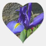 Iris púrpura colcomanias corazon