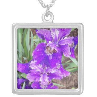 Iris púrpura con el collar de las gotitas de agua