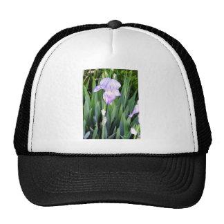 iris púrpura con el rocío moring gorra