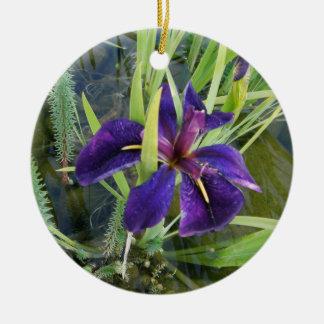 Iris púrpura del agua adorno