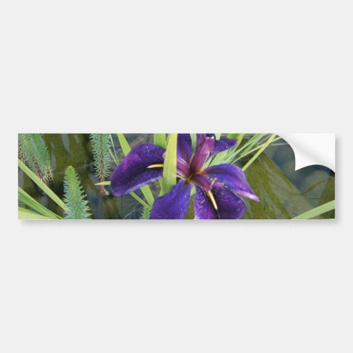 Iris púrpura del agua etiqueta de parachoque