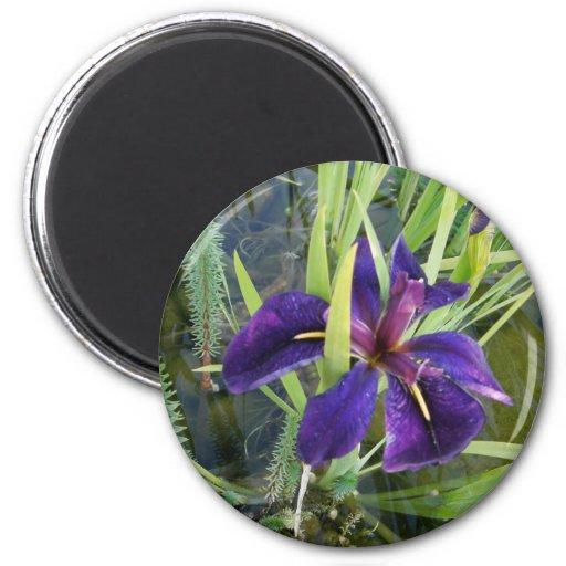 Iris púrpura del agua imán redondo 5 cm