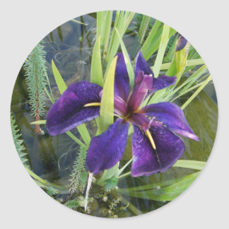Iris púrpura del agua pegatina redonda