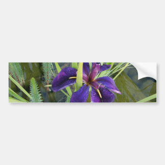 Iris púrpura del agua pegatina para auto