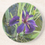 Iris púrpura del agua posavasos para bebidas