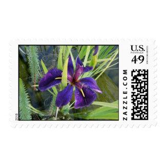 Iris púrpura del agua sello postal
