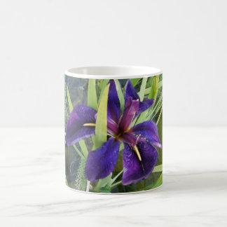 Iris púrpura del agua taza