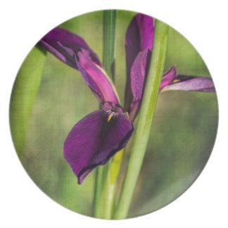 Iris púrpura del gallo de pelea de Luisiana Platos