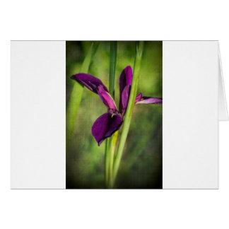 Iris púrpura del gallo de pelea de Luisiana Tarjeta De Felicitación