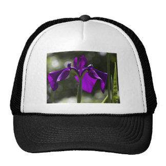 Iris púrpura del pantano con el fondo de Bokeh Gorro