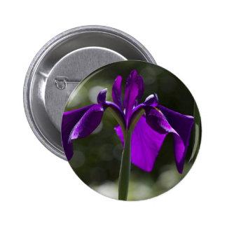 Iris púrpura del pantano con el fondo de Bokeh Pin