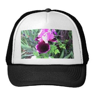 Iris púrpura del terciopelo gorra