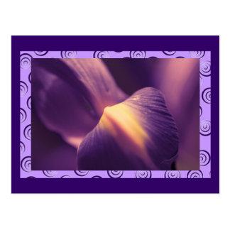 Iris púrpura, fotografía macra, color, plantillas postal