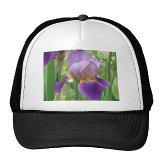 Iris púrpura gorro
