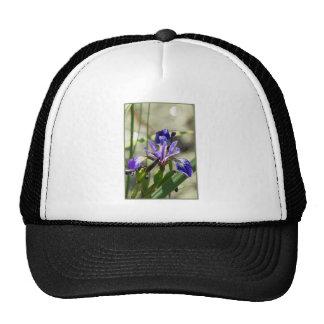 Iris púrpura gorro de camionero
