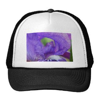 Iris púrpura gorros