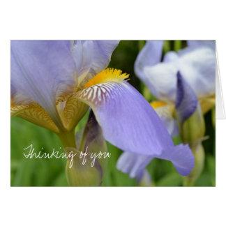 Iris púrpura hermoso tarjeta de felicitación