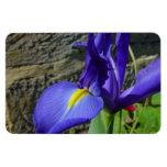 Iris púrpura imán de vinilo