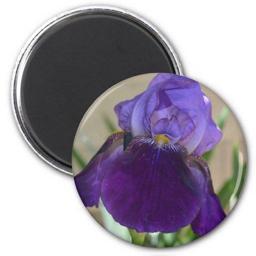 Iris púrpura imán redondo 5 cm