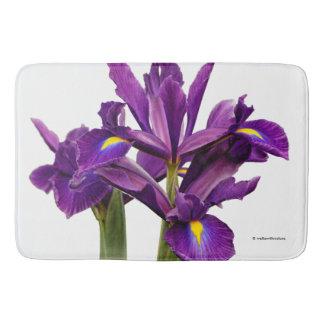 Iris púrpura imberbe