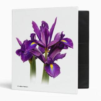 """Iris púrpura imberbe carpeta 1"""""""