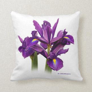 Iris púrpura imberbe cojín