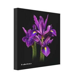 Iris púrpura imberbe impresion en lona