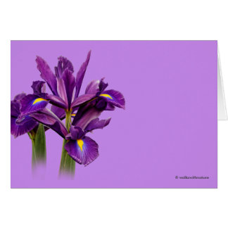Iris púrpura imberbe tarjeta de felicitación