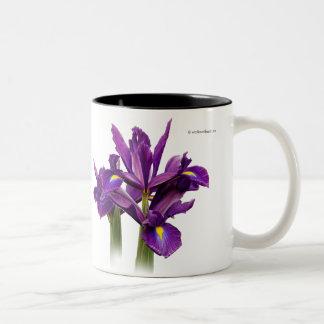 Iris púrpura imberbe taza de dos tonos