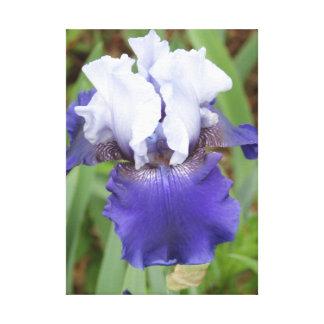 Iris púrpura impresión en lienzo