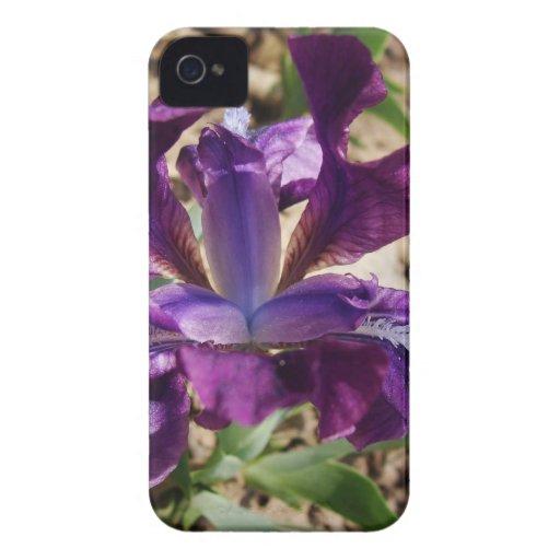Iris púrpura iPhone 4 Case-Mate carcasa