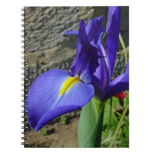 Iris púrpura libretas