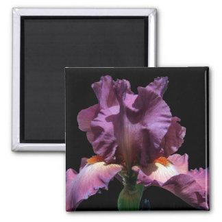 Iris púrpura llamativo imán cuadrado