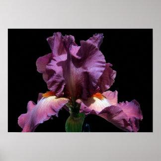 Iris púrpura llamativo póster