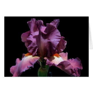 Iris púrpura llamativo tarjeta de felicitación