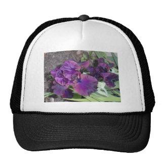 iris púrpura oscuro gorras