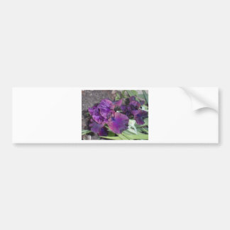 iris púrpura oscuro pegatina para auto