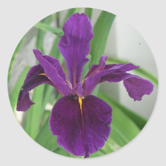Iris púrpura pegatina redonda