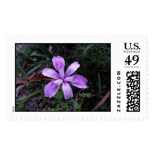 Iris púrpura perfecto franqueo