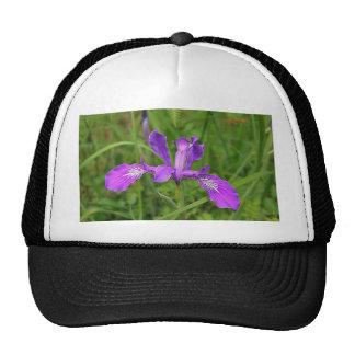 Iris púrpura salvaje gorra
