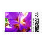 Iris púrpura sellos
