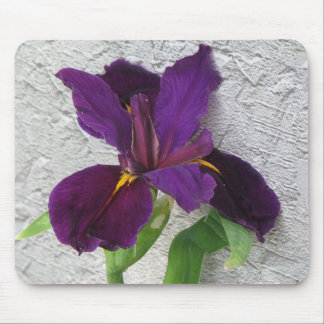 Iris púrpura tapetes de raton